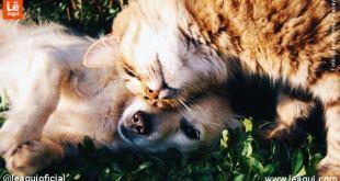 animais de estimação isolamento