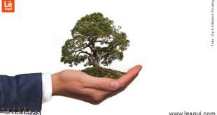 mão de home segurando uma árvore de forma protetora ilustrando quarentena e meio ambiente