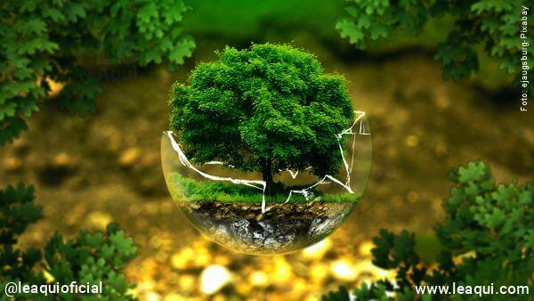 montagem fotográfica com uma árvore dentro de um globo de cristal recuperação saudável e verde