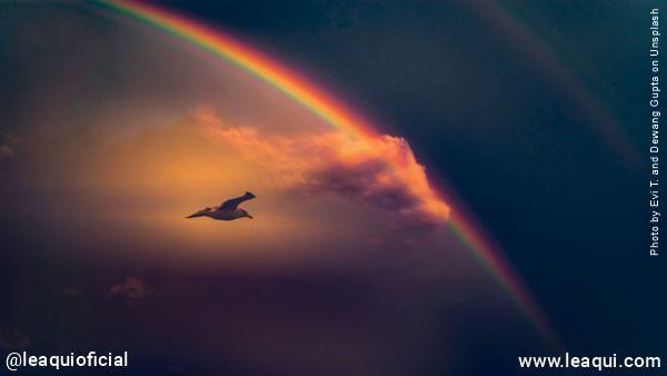 Pássaro voando com um arco-íris no céu final da existência