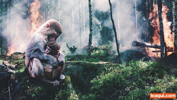 imagem de uma floresta em chama e no canto esquerdo uma macaca abraça seu filhote Khalil Gibran natureza