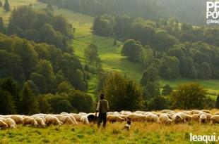 um verdejante campo sereno com um rebanho de ovelhas calma e seguramente pastando poder do Salmo 23