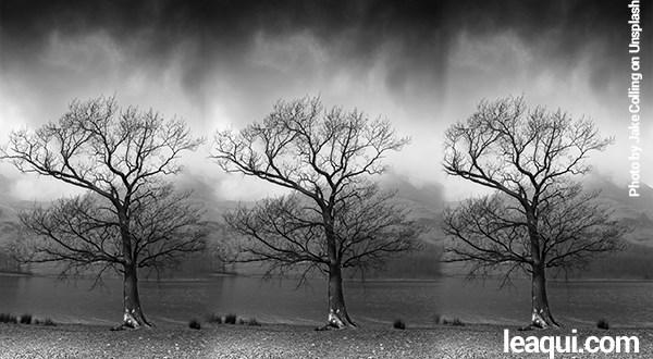 3 árvores secas um ambiente cinzento e escuro sentimentos feridos
