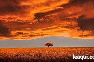 um carvalho solitário em meio a um enorme campo e sob ele uma pesada camada de nuvens paciência com a vida