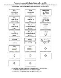 Photosynthesis Respiration Worksheet Worksheets For School ...