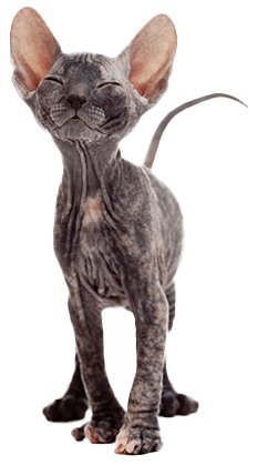 Image Result For Good Cats For Allergy Sufferers