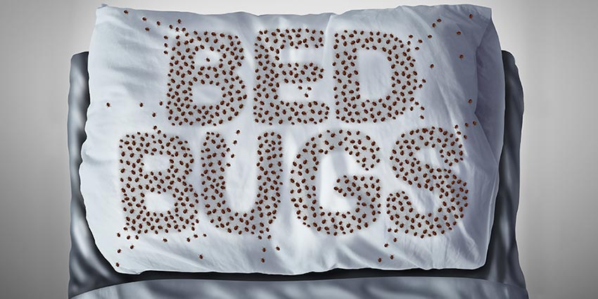 How to Prevent Bed Bugs from Infesting Your Home
