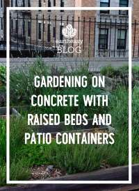 Gardening on Concrete With Raised Beds and Patio ...
