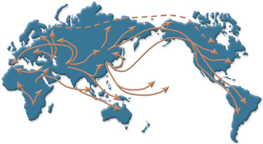 Migration Patterns