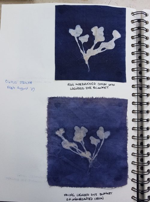 Kat Szabo: Discharge prints from oxalis with dye blankets