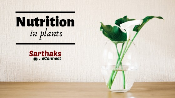 Nutrition In Plants Life Processes Photosynthesis Sarthaks Econnect