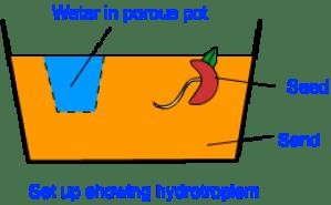 hydrotropism