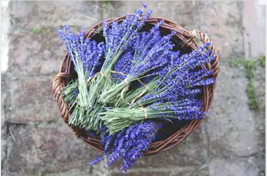 This image has an empty alt attribute; its file name is lavender.jpg