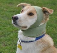 Head Wrap dogs