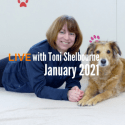 Toni Shelbourne teaches TTouch for dogs