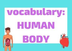 Italian Vocabulary Human Body
