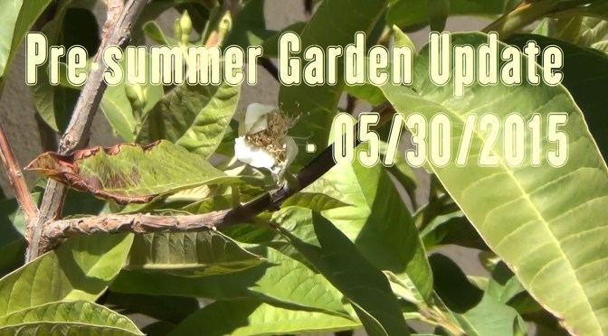 Pre-Summer Garden Update