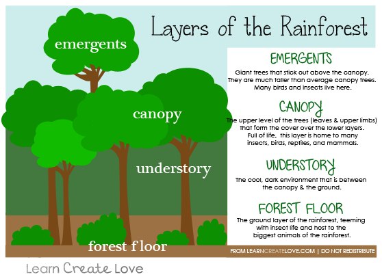 amazon rainforest layers diagram what is a visio of the printable