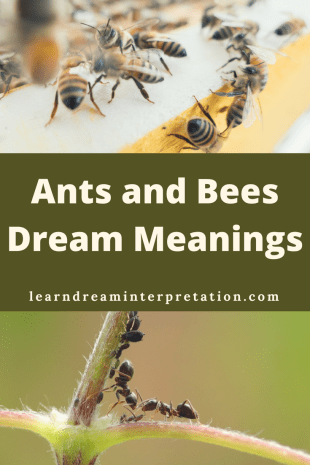 Ants and Bees Dream Meanings