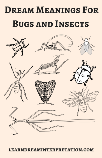 Bug and Insects Dream Meanings