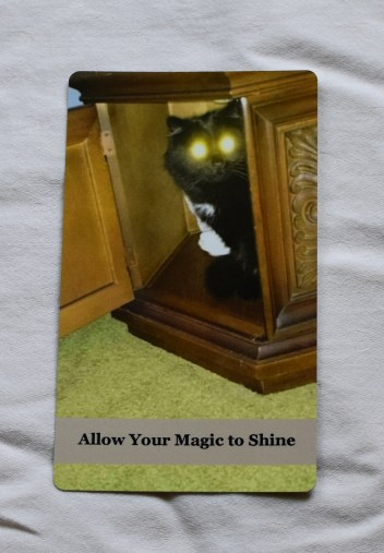 Purrs for Humans - Allow Your Magic to Shine
