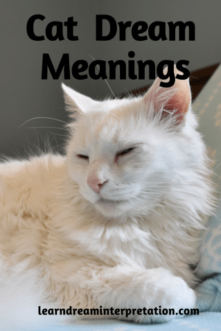 Cat Dream Meanings