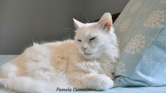 Cat Symbol and Dream Meanings