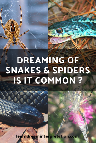 Dreaming of Snakes and Spiders is Common - Learn about snake and spider symbolism from these four columns and three blogs
