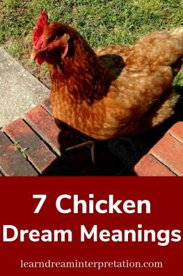 7 Chicken Dream Meanings