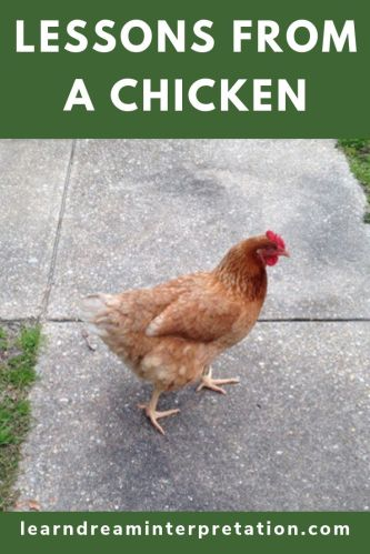Lessons From a Chicken