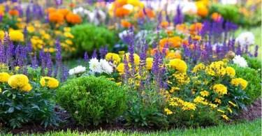 Lesson 79 - Garden