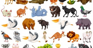 Lesson 40 - Wild Animals