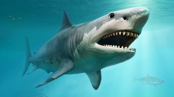 VOA Learning English - How Sharks Have Paid the Price for Demand for Shark Fin Soup