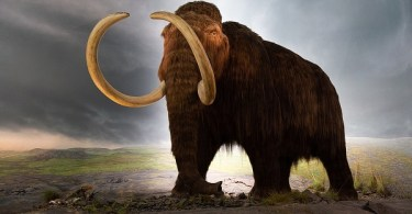 VOA Learning English - Mapping the Genes of the Woolly Mammoth
