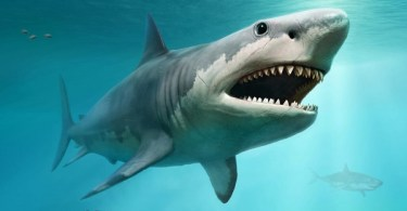 VOA Learning English - Sharks: A Bad Image, but Oceans Value Them