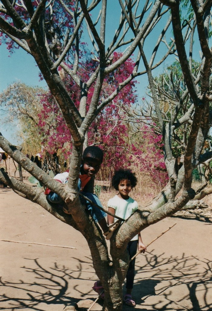 Photos of Africa-children Climbing Trees In Africa, Learn English With Africa, October 2017