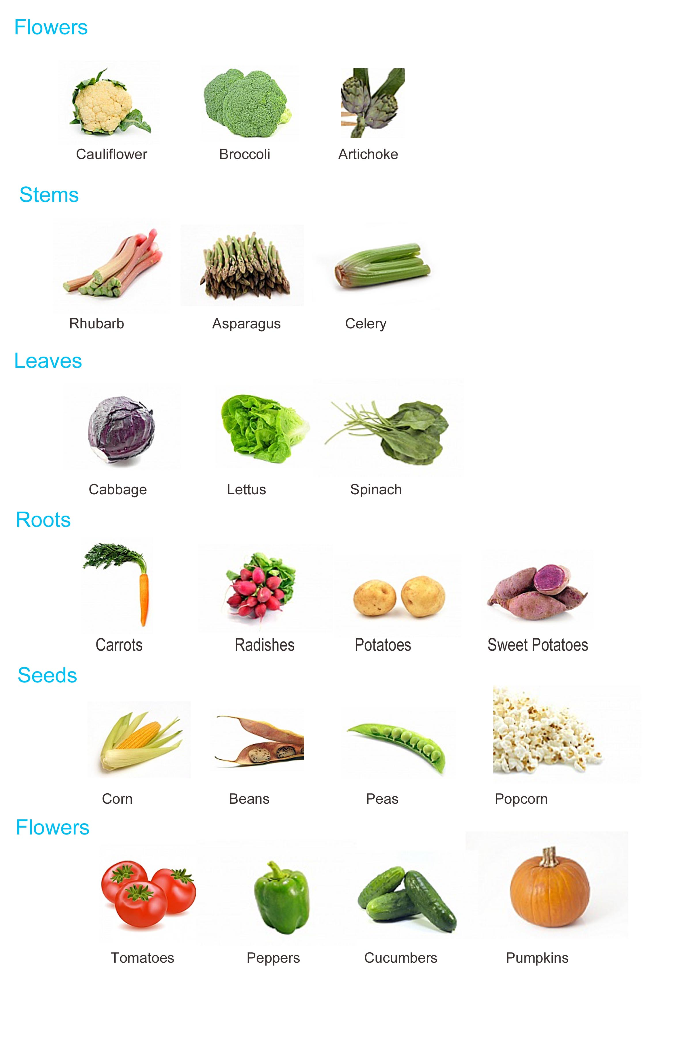 Plants As Source Of Food Learnex