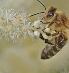 Test Honey Bee Memory Insect Science Project [ 720 x 1280 Pixel ]