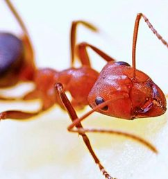 Learn About Ants Science Lesson for Kids   Insects [ 720 x 1280 Pixel ]