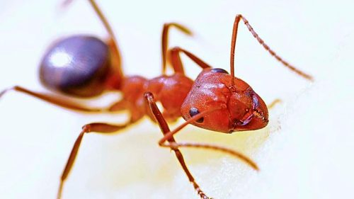 small resolution of Learn About Ants Science Lesson for Kids   Insects