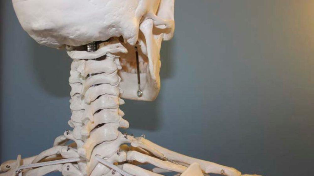 medium resolution of Skeleton Projects