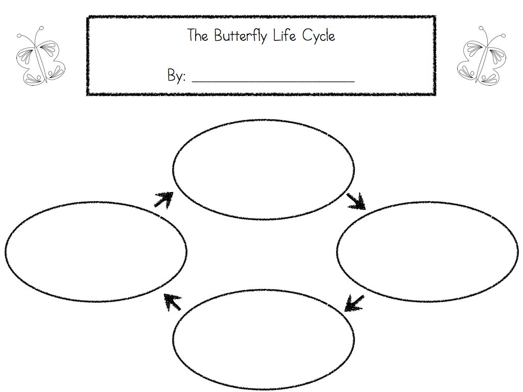 Worksheet Animal And Plant Life Cycle