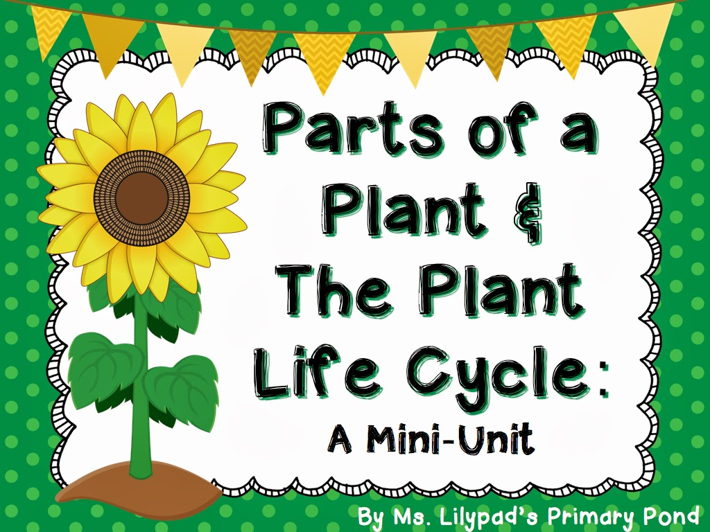 Flowers And Their Life Cycles Worksheet Answer Key
