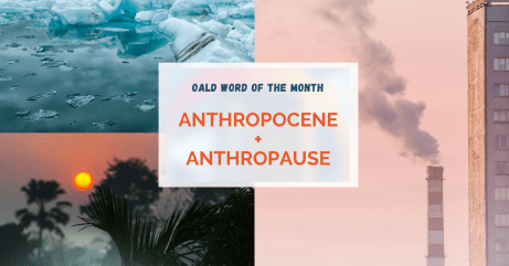 anthrocene anthropause