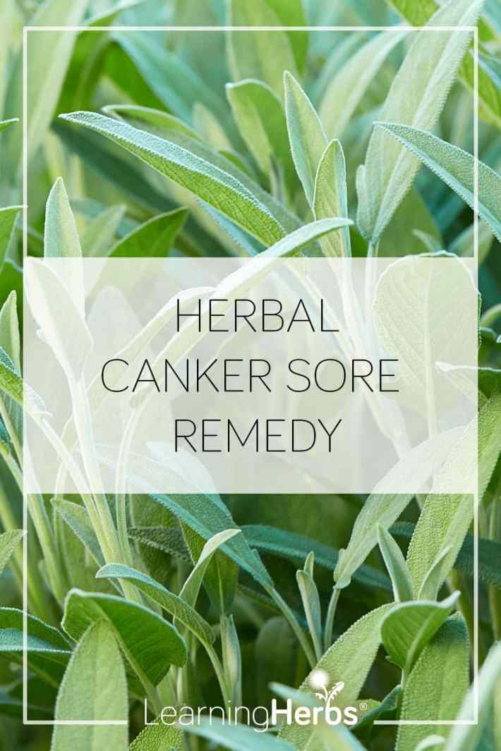 herbal canker sore remedy
