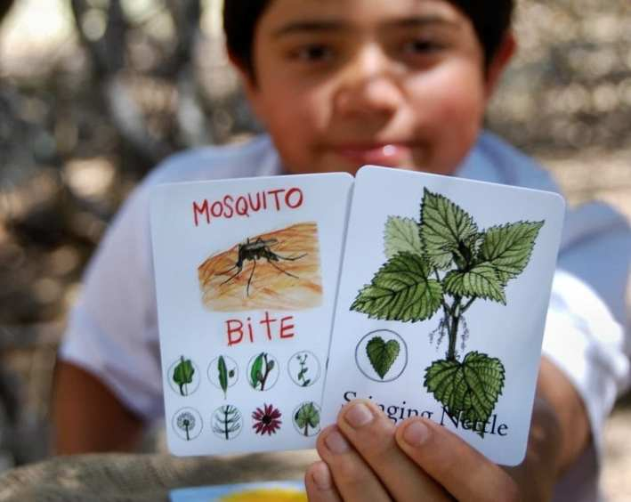 Wildcraft teaches about plants and their medicinal uses