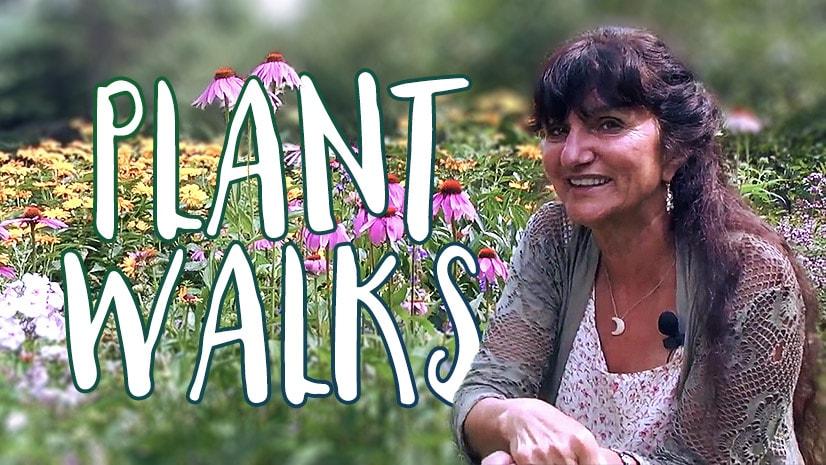 Plant Walks