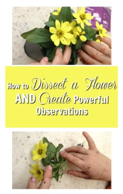 How to dissect a flower and create powerful observations.