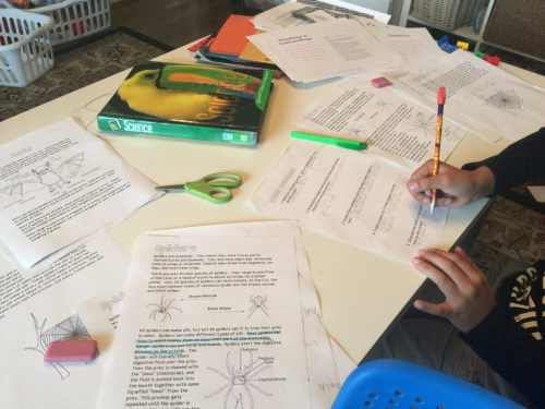 Halloween Reading Comprehension. Spiders informational text.
