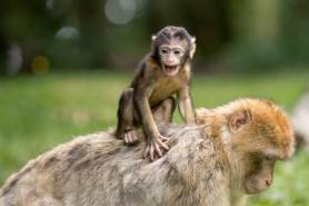 monkey on the back - parkinsons law